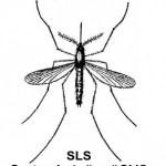 SLS czyli System Lokalizacji SMS